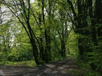 foto_art/[693]targownica_park_200_150.jpg